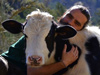 cows-love-cuddles s